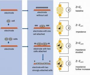 独特的实时无标记细胞分析技术(Real Time Cellular Analysis)
